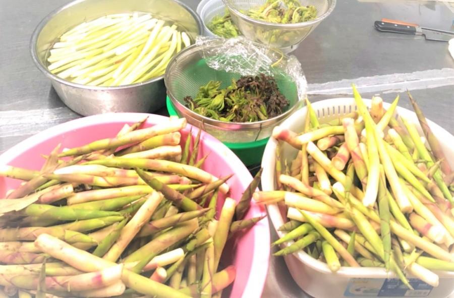 【春の山菜祭り!!!】